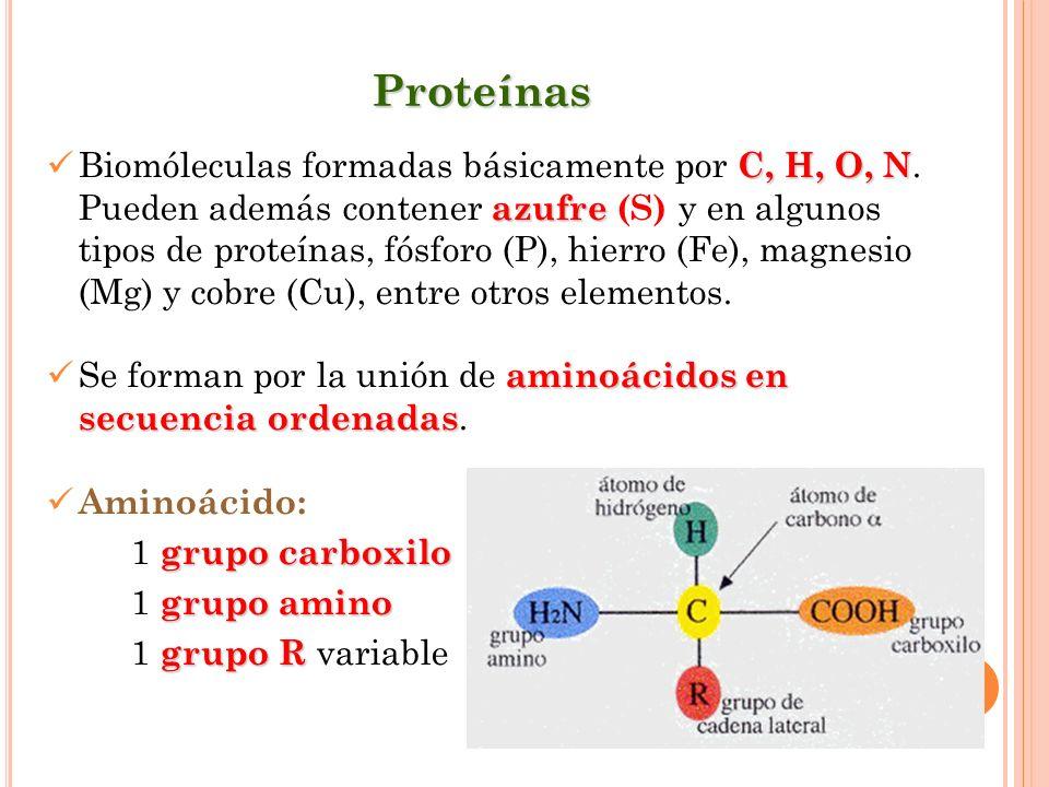 Proteínas C, H, O, N azufre Biomóleculas formadas básicamente por C, H, O, N. Pueden además contener azufre (S) y en algunos tipos de proteínas, fósfo