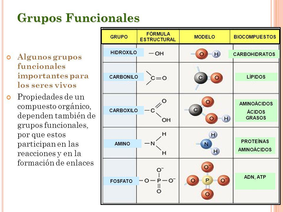 Grupos Funcionales Algunos grupos funcionales importantes para los seres vivos Propiedades de un compuesto orgánico, dependen también de grupos funcio