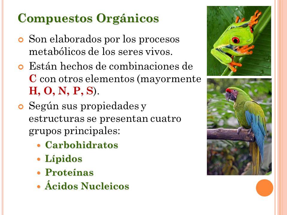 Compuestos Orgánicos Son elaborados por los procesos metabólicos de los seres vivos. Están hechos de combinaciones de C con otros elementos (mayorment