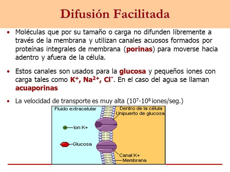 porinasMoléculas que por su tamaño o carga no difunden libremente a través de la membrana y utilizan canales acuosos formados por proteínas integrales