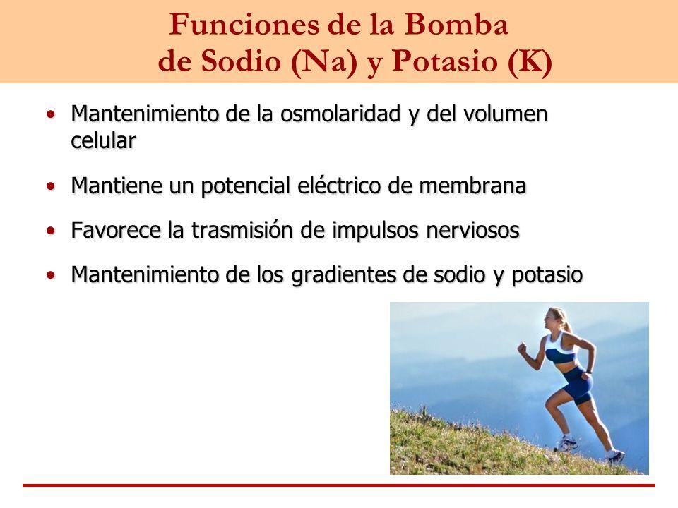 Funciones de la Bomba de Sodio (Na) y Potasio (K) Mantenimiento de la osmolaridad y del volumen celularMantenimiento de la osmolaridad y del volumen c