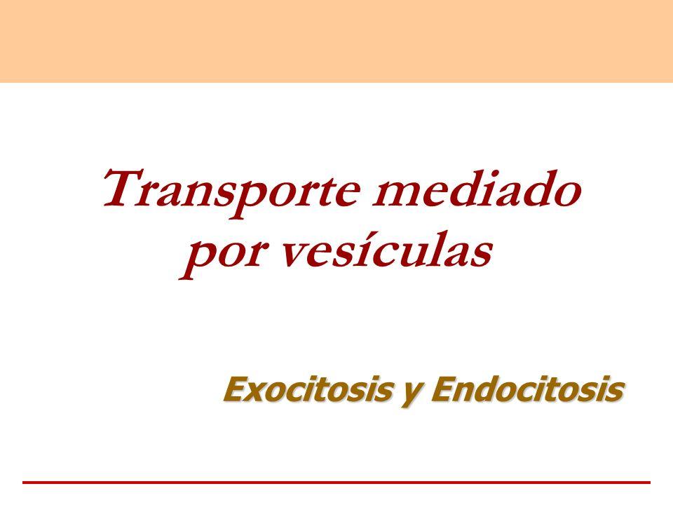 Transporte mediado por vesículas Exocitosis y Endocitosis