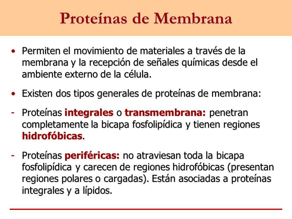 Permiten el movimiento de materiales a través de la membrana y la recepción de señales químicas desde el ambiente externo de la célula.Permiten el mov