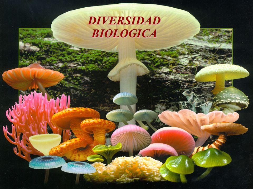 Concepto de Biodiversidad La biodiversidad se refiere a la variedad de la vida, incluidos los ecosistemas (terrestres y acuáticos), los complejos ecológicos de que forman parte, la diversidad entre las especies y la diversidad dentro de cada especie.