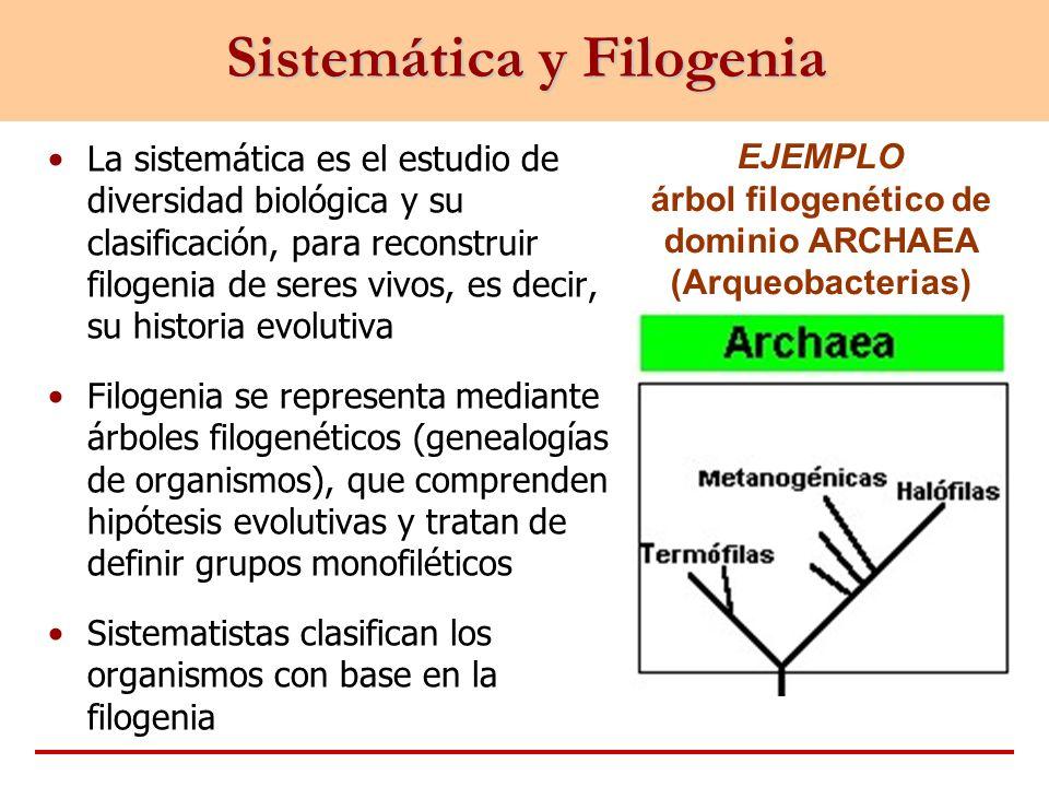 Sistemática y Filogenia EJEMPLO árbol filogenético de dominio ARCHAEA (Arqueobacterias) La sistemática es el estudio de diversidad biológica y su clas