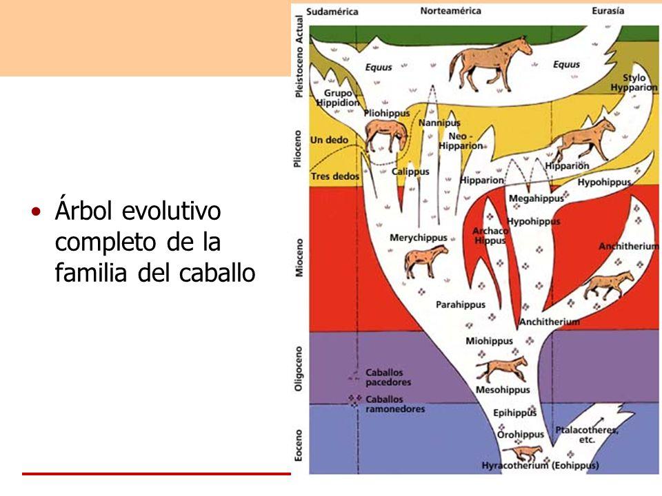 Árbol evolutivo completo de la familia del caballo