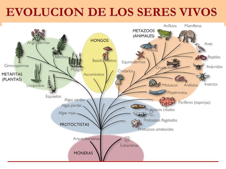 EVOLUCION DE LOS SERES VIVOS