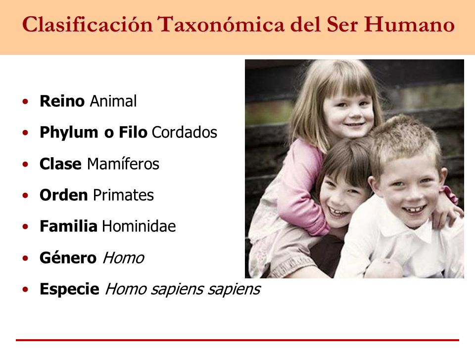Clasificación Taxonómica del Ser Humano Reino Animal Phylum o Filo Cordados Clase Mamíferos Orden Primates Familia Hominidae Género Homo Especie Homo