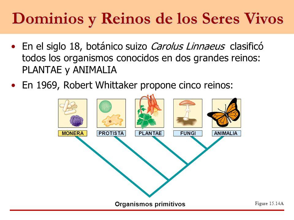 En el siglo 18, botánico suizo Carolus Linnaeus clasificó todos los organismos conocidos en dos grandes reinos: PLANTAE y ANIMALIA En 1969, Robert Whi