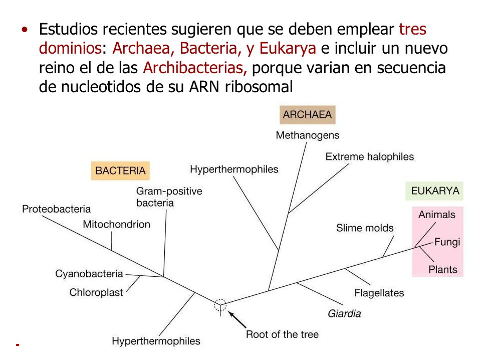 Estudios recientes sugieren que se deben emplear tres dominios: Archaea, Bacteria, y Eukarya e incluir un nuevo reino el de las Archibacterias, porque