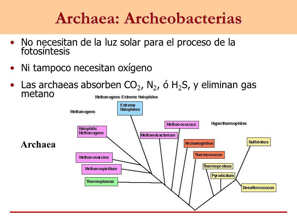 Archaea: Archeobacterias No necesitan de la luz solar para el proceso de la fotosíntesis Ni tampoco necesitan oxígeno Las archaeas absorben CO 2, N 2,