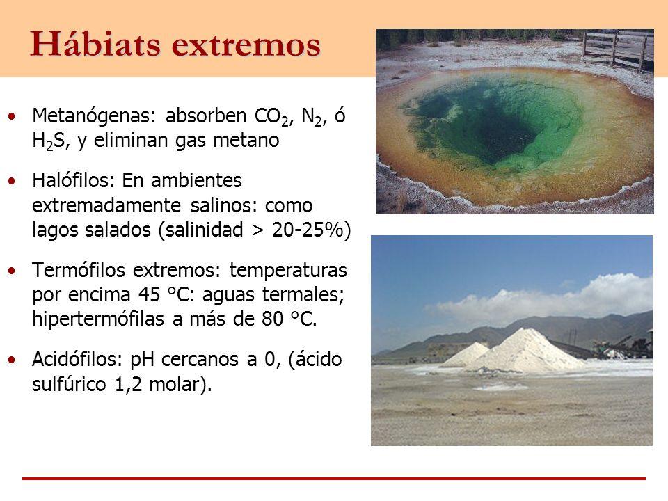 Hábiats extremos Metanógenas: absorben CO 2, N 2, ó H 2 S, y eliminan gas metano Halófilos: En ambientes extremadamente salinos: como lagos salados (s