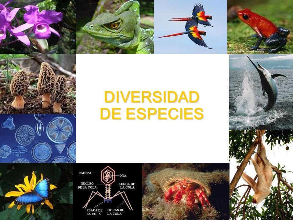Diversidad de Especies La diversidad o variedad de especies es el número de especies diferentes que conviven en un área geográfica determinada.