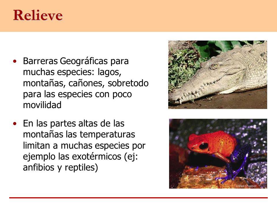 Relieve Barreras Geográficas para muchas especies: lagos, montañas, cañones, sobretodo para las especies con poco movilidad En las partes altas de las
