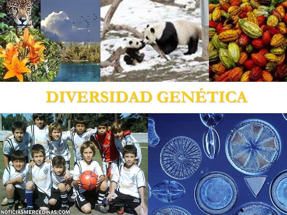 Diversidad Genética La diversidad genética es la variación entre los genes de los individuos de una especie.
