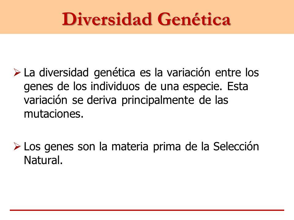 Diversidad Genética La diversidad genética es la variación entre los genes de los individuos de una especie. Esta variación se deriva principalmente d