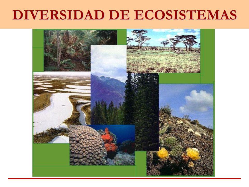 Diversidad de Ecosistemas Por variedad de ecosistemas se entiende a la variedad de comunidades de organismos que ocurren en un área.