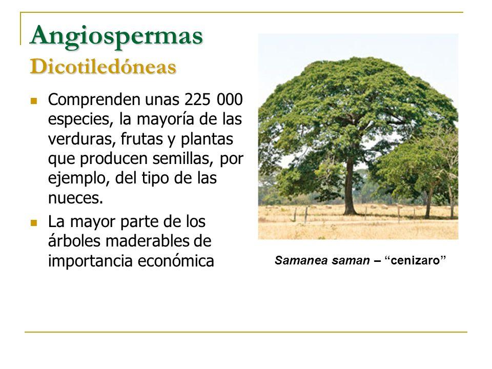 La mayor parte de los árboles maderables de importancia económica