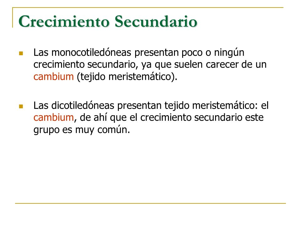 Crecimiento Secundario Las monocotiledóneas presentan poco o ningún crecimiento secundario, ya que suelen carecer de un cambium (tejido meristemático)