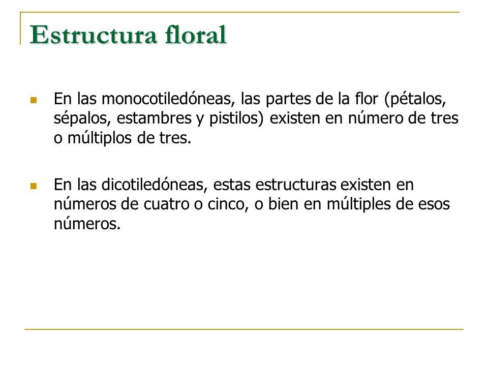 Estructura floral En las monocotiledóneas, las partes de la flor (pétalos, sépalos, estambres y pistilos) existen en número de tres o múltiplos de tre