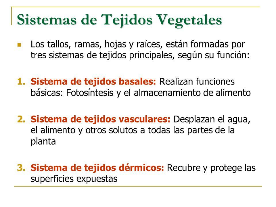 Sistemas de Tejidos Vegetales Los tallos, ramas, hojas y raíces, están formadas por tres sistemas de tejidos principales, según su función: 1.Sistema
