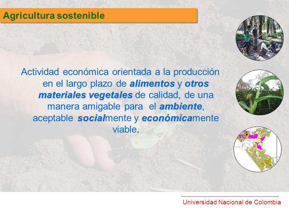 Universidad Nacional de Colombia alimentosotros materiales vegetales ambiente socialeconómica Actividad económica orientada a la producción en el larg