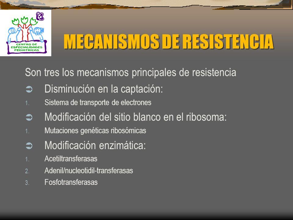 AMINOGLICÓDISOS Estreptomicina Kanamicina Gentamicina Tobramicina Netilmicina Amikacina Isepamicina