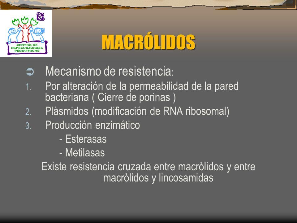 MACRÓLIDOS Mecanismo de Acción: Inhiben la Síntesis de Proteínas: 1. Sub – Unidades 50s ribosomal Pueden llegar a ser Bactericidas si se aumenta la co