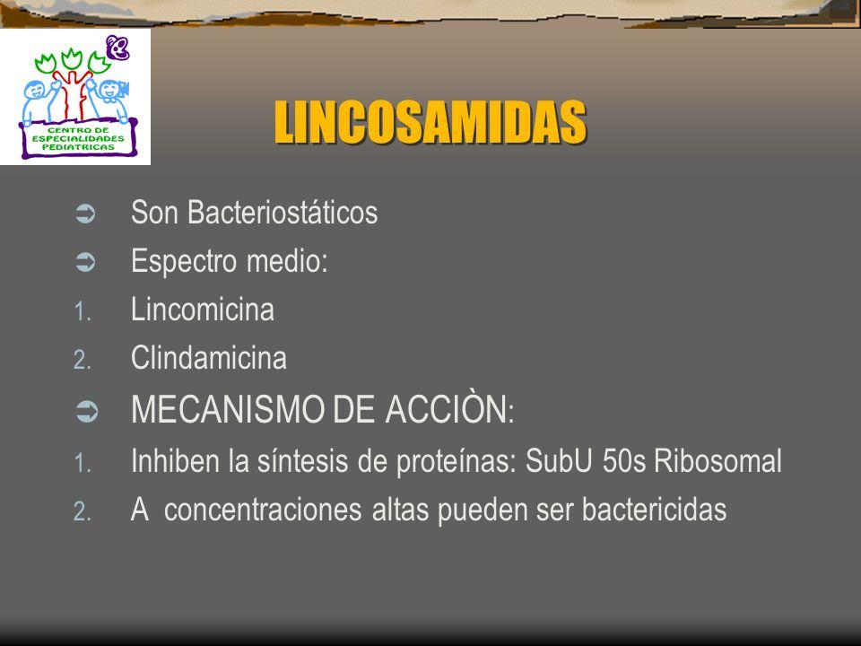 MACRÓLIDOS Efectos colaterales: 1. Ototoxicidad 2. Irritación gástrica 3. Ictericia transitoria : Colestàsis.- Dolor abdominal,Fiebre, Prurito y Hepat