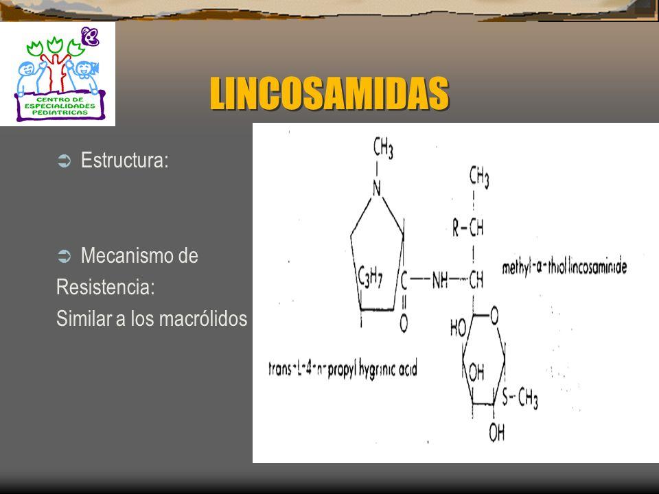 LINCOSAMIDAS Son Bacteriostáticos Espectro medio: 1. Lincomicina 2. Clindamicina MECANISMO DE ACCIÒN : 1. Inhiben la síntesis de proteínas: SubU 50s R