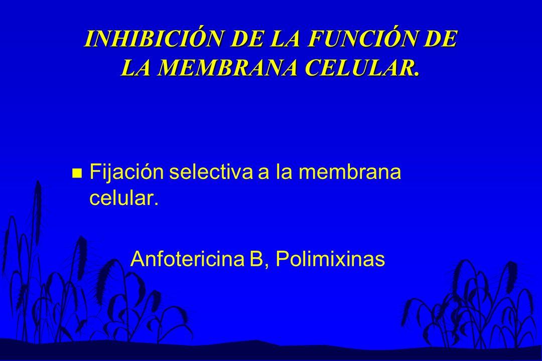 INHIBICIÓN DE LA FUNCIÓN DE LA MEMBRANA CELULAR. n Fijación selectiva a la membrana celular. Anfotericina B, Polimixinas