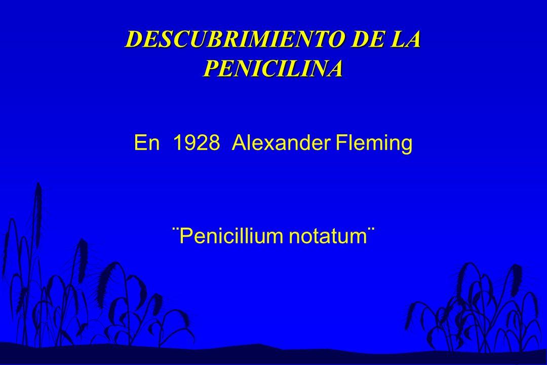 DESCUBRIMIENTO DE LA PENICILINA En 1928 Alexander Fleming ¨Penicillium notatum¨