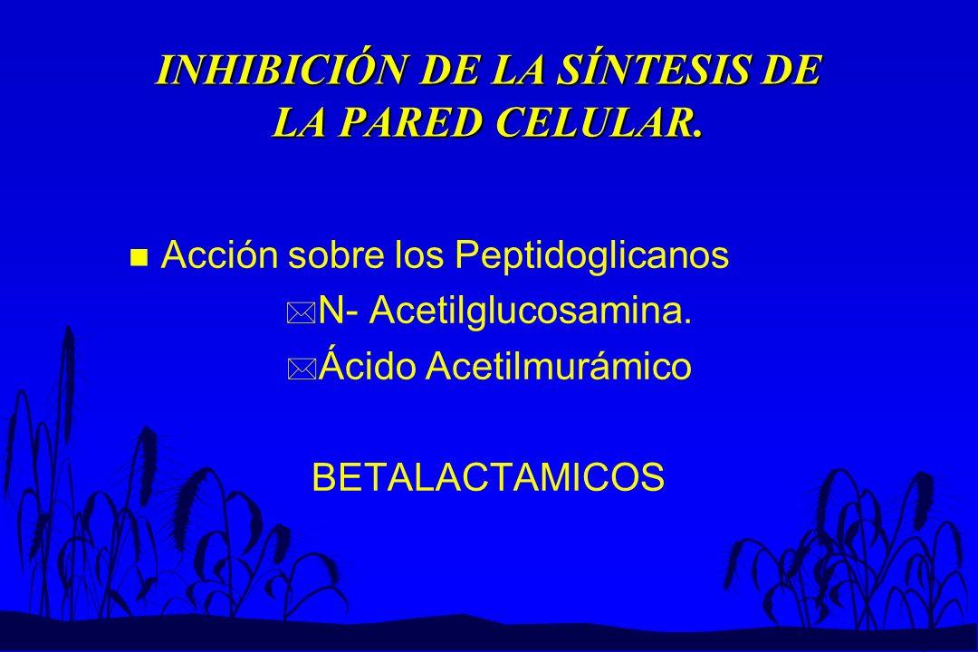 INHIBICIÓN DE LA SÍNTESIS DE LA PARED CELULAR. n Acción sobre los Peptidoglicanos * N- Acetilglucosamina. * Ácido Acetilmurámico BETALACTAMICOS