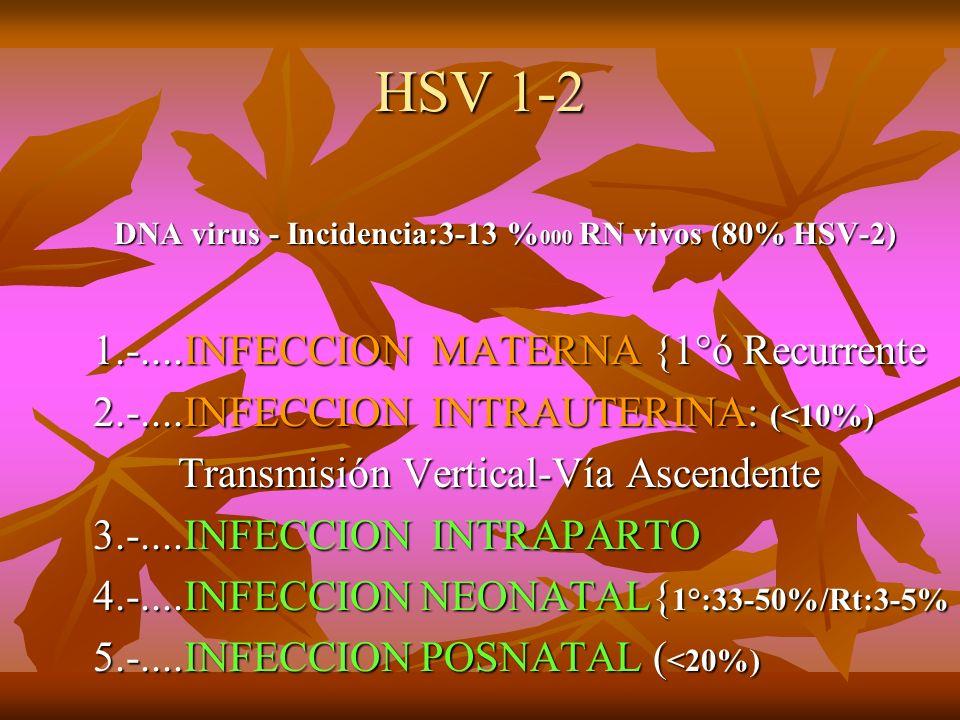 HSV 1-2 DNA virus - Incidencia:3-13 % 000 RN vivos (80% HSV-2) DNA virus - Incidencia:3-13 % 000 RN vivos (80% HSV-2) 1.-....INFECCION MATERNA {1°ó Re