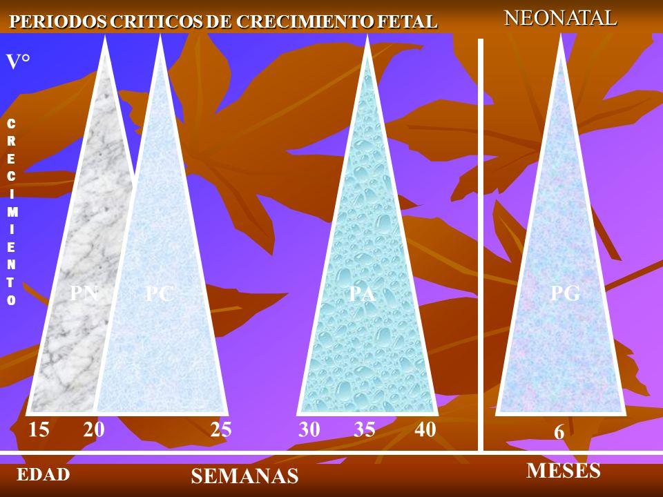 PERIODOS CRITICOS DE CRECIMIENTO FETAL NEONATAL SEMANAS MESES EDAD 15 20 25 30 35 40 6 PN PCPA PG V° C R E C I M I E N T O