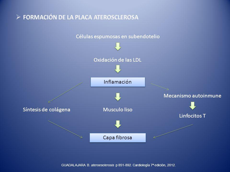 Células espumosas en subendotelio Oxidación de las LDL Inflamación Musculo liso Capa fibrosa Síntesis de colágena Mecanismo autoinmune Linfocitos T GU