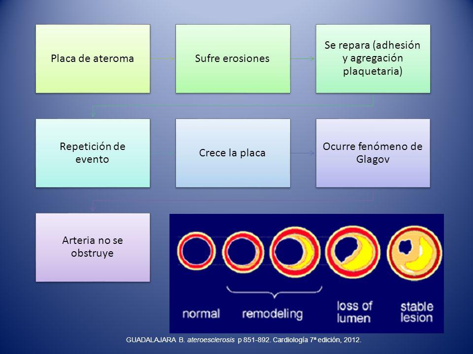 Placa de ateromaSufre erosiones Se repara (adhesión y agregación plaquetaria) Repetición de evento Crece la placa Ocurre fenómeno de Glagov Arteria no