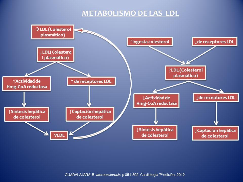 METABOLISMO DE LAS LDL LDL (Colesterol plasmático) Actividad de Hmg-CoA reductasa LDL (Colesterol plasmático) de receptores LDL Ingesta colesterol Sín