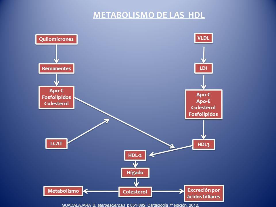 METABOLISMO DE LAS HDL Quilomicrones Apo-C Apo-E Colesterol Fosfolípidos Apo-C Apo-E Colesterol Fosfolípidos VLDL LDI HDL-2 Hígado HDL3 LCAT Remanente