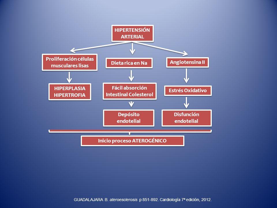 HIPERTENSIÓN ARTERIAL Proliferación células musculares lisas HIPERPLASIA HIPERTROFIA HIPERPLASIA HIPERTROFIA Dieta rica en Na Fácil absorción Intestin