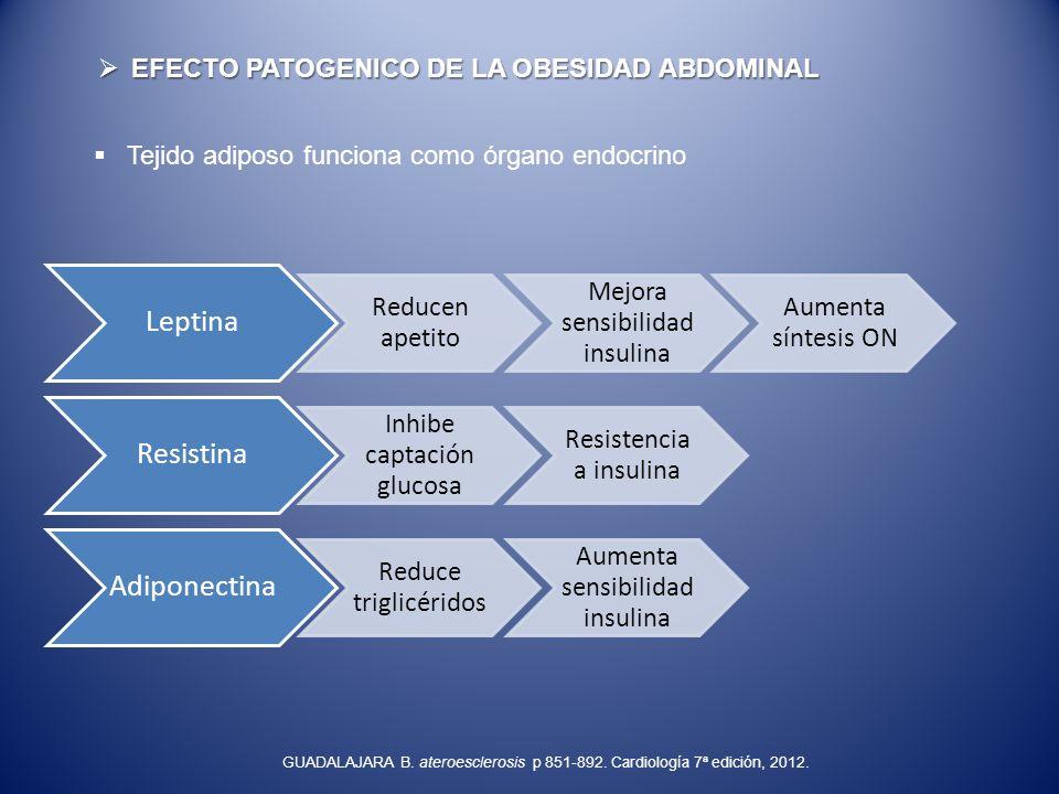 EFECTO PATOGENICO DE LA OBESIDAD ABDOMINAL EFECTO PATOGENICO DE LA OBESIDAD ABDOMINAL Tejido adiposo funciona como órgano endocrino Leptina Reducen ap