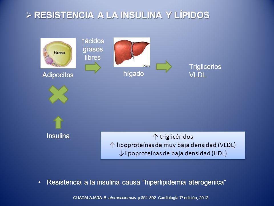 RESISTENCIA A LA INSULINA Y LÍPIDOS RESISTENCIA A LA INSULINA Y LÍPIDOS Insulina Adipocitos ácidos grasos libres hígado Triglicerios VLDL triglicérido