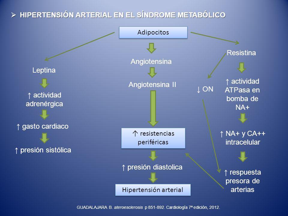 HIPERTENSIÓN ARTERIAL EN EL SÍNDROME METABÓLICO HIPERTENSIÓN ARTERIAL EN EL SÍNDROME METABÓLICO Adipocitos Leptina actividad adrenérgica gasto cardiac
