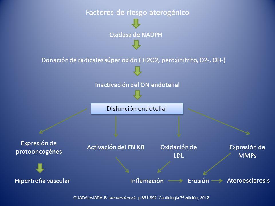 Factores de riesgo aterogénico Oxidasa de NADPH Donación de radicales súper oxido ( H2O2, peroxinitrito, O2-, OH-) Inactivación del ON endotelial Disf