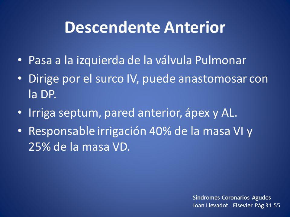 Descendente Anterior Pasa a la izquierda de la válvula Pulmonar Dirige por el surco IV, puede anastomosar con la DP. Irriga septum, pared anterior, áp
