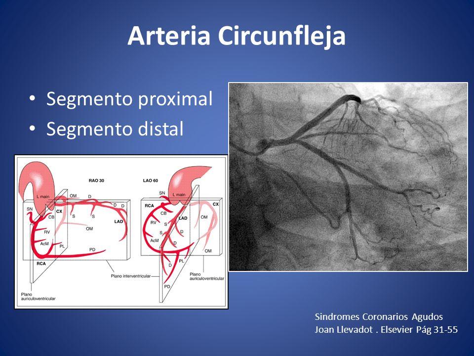 Arteria Circunfleja Segmento proximal Segmento distal Sindromes Coronarios Agudos Joan Llevadot. Elsevier Pág 31-55