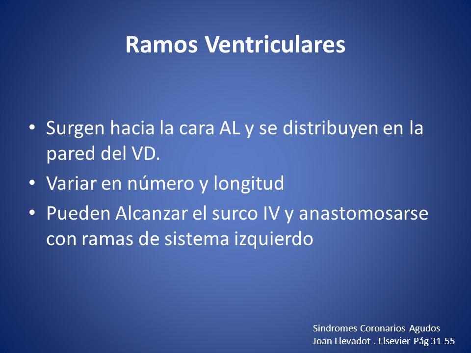 Ramos Ventriculares Surgen hacia la cara AL y se distribuyen en la pared del VD. Variar en número y longitud Pueden Alcanzar el surco IV y anastomosar