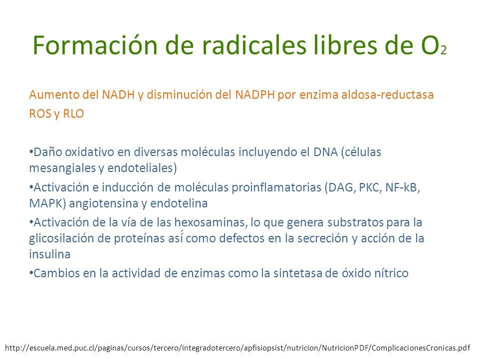 Formación de radicales libres de O 2 Aumento del NADH y disminución del NADPH por enzima aldosa-reductasa ROS y RLO Daño oxidativo en diversas molécul
