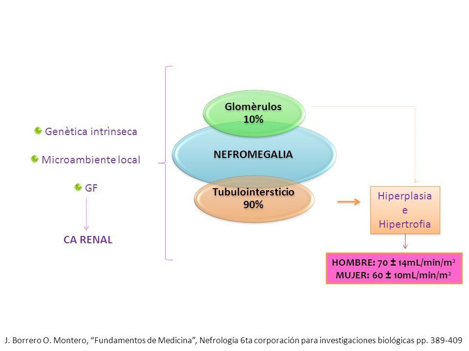 NEFROMEGALIA Glomèrulos 10% Tubulointersticio 90% Hiperplasia e Hipertrofia HOMBRE: 70 ± 14mL/min/m 2 MUJER: 60 ± 10mL/min/m 2 Genètica intrìnseca Mic