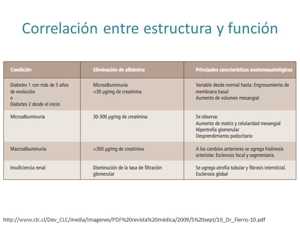 http://www.clc.cl/Dev_CLC/media/Imagenes/PDF%20revista%20médica/2009/5%20sept/10_Dr_Fierro-10.pdf Correlación entre estructura y función